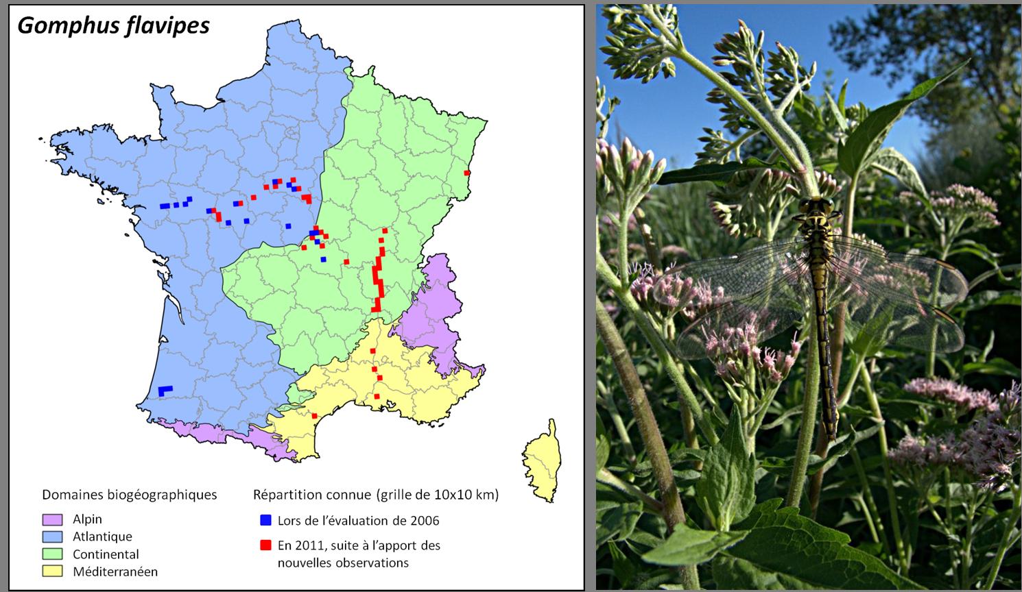 Etat de conservation plan national d 39 actions odonates - Les domaines de l etat ...