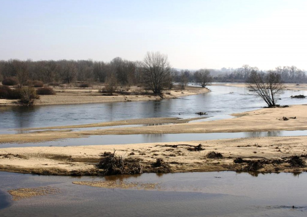 Les bancs de sable de la Loire et de l'Allier sont favorables au développement de plusieurs espèces de Gomphidés © A. Soissons